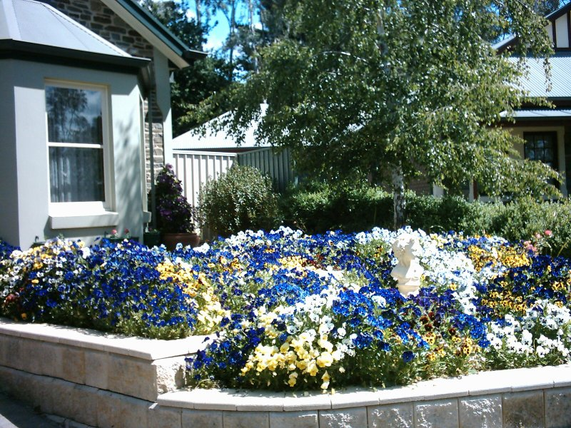 Hahndorf Flowers in our street