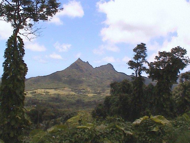 Oahu Pali Highway Scenic View 1
