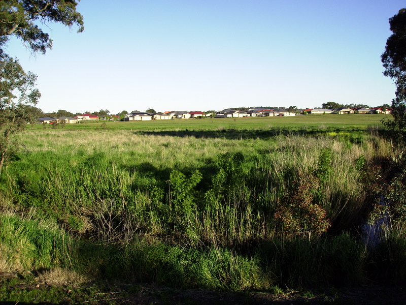 Mount Barker meadow