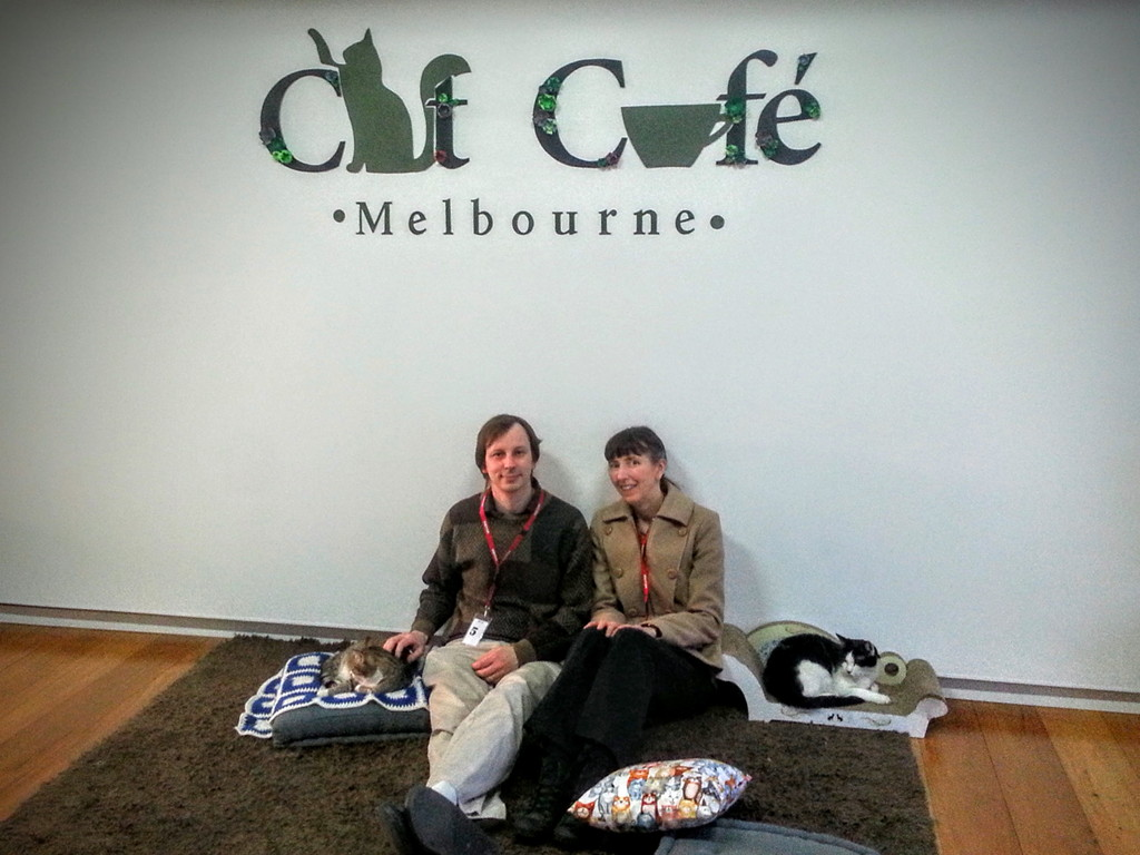 Melbourne Cat Cafe Adam, Xanni, Muse, Nod