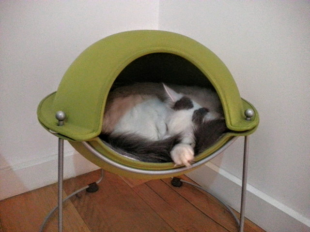 Melbourne Cat Cafe Sherlock